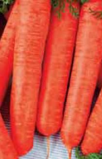 Семена моркови Лонг роте Штумпфе 100г (Коуел Германия)