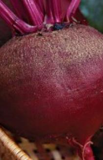 Семена свеклы столовой Красный шар 500г