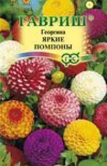 Семена Георгина Яркие помпоны 0,2г (Гавриш)