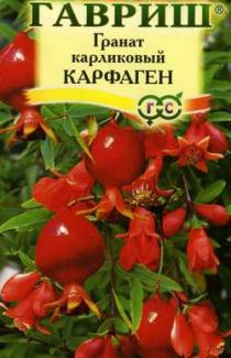 Семена Гранат карликовый Карфаген 5шт