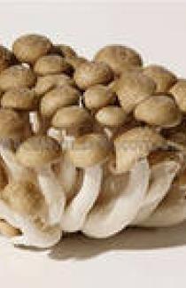 МИЦЕЛИЙ ОПЕНьКа МРАМОРНОГО (Hypsizygus marmoreus white)