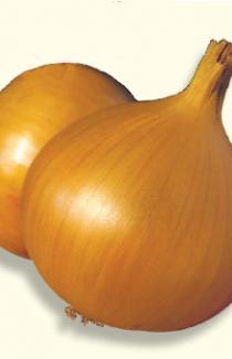 Семена лука репчатого Ибис 1г