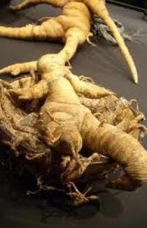 Семена Мандрагоры (officinarum)