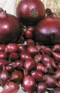 Семена лука-севка Ред Барон №1