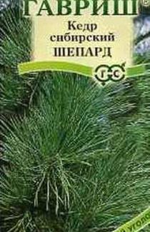 Семена Кедр сибирский Шепард 3шт