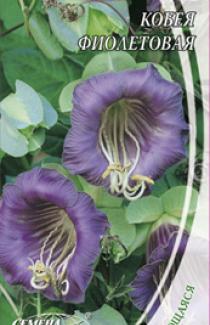 Семена Кобеи Фиолетовой (0,4г)