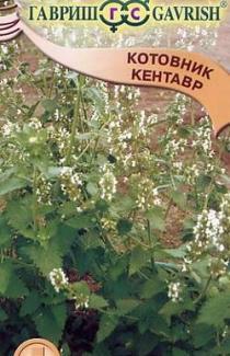 Семена котовника Кентавр  0,2г