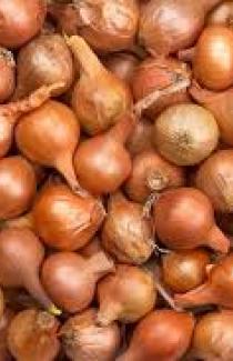 Семена лука-севка Штутгартен №2 Польша