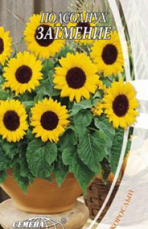 Семена Подсолнуха низкорослого Затмение (1г)