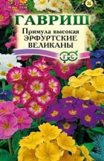 Семена Примула Высокая Ерфуртские Великаны 20 шт
