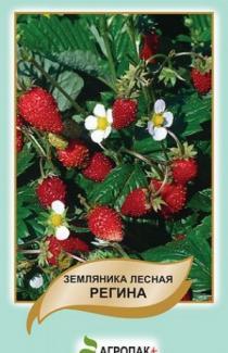 Семена земляника лесная Регина 0,1г (Legutko Польша)