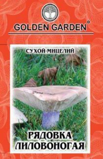 Семена сухой мицелий Рядовка лиловоногая 10г