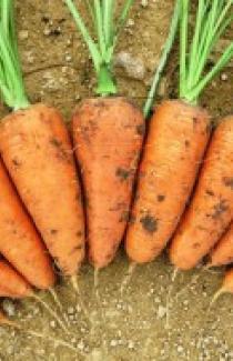 Семена моркови Шантане Ред Коред 500г