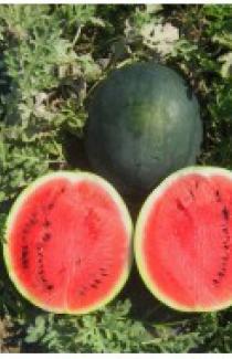 Семена арбуза Шуга бейби 0,5 кг