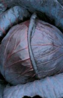 Семена капусты краснокочанной Топарини 0,25кг