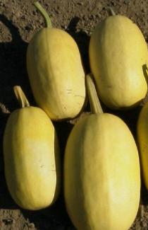 Семена тыквы Макаронный 2г