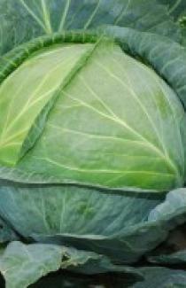 Семена капусты белокачанной Тюркиз 0,5кг