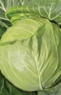 Семена капусты белокачанной Увертюра F1 1000шт