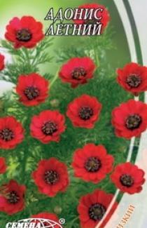 Семена Адониса летнего (1г)