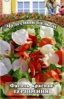 Семена Фасоли красной Герцогиня (5шт)