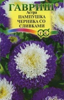 Семена Астры Пампушка черника со сливками (0,3г)