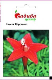 Семена Ипомеи Кардинал (0,5г)