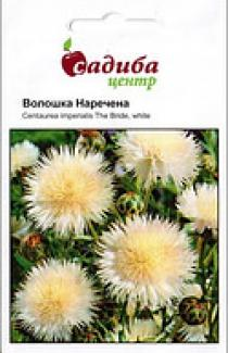 Семена Василек мускатный Невеста, белый 0,3г (Hem Zaden Голландия)