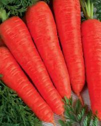Семена моркови Осенняя королева 100г (Коуел Германия