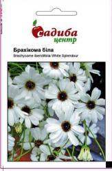 Семена Брахикома белая 0,1г (Hem Zaden, Голландия)