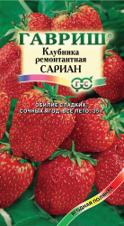 Семена клубника Сариан 4шт