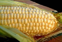 Кукуруза Кадр 1кг