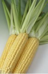 Кукуруза Одма
