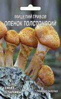 Семена мицелий грибов Опенок толстоногий 10шт