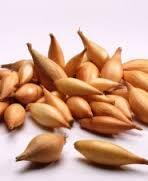 Семена лука-севка Румба