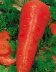 Семена моркови Флакке GSN Semences 500г