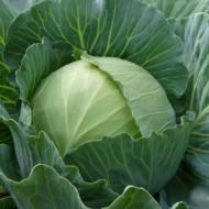 Семена капусты белокачанной Славанова 0,5кг