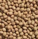 приобрести семена весовой сои