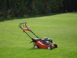 Семена газонной  травы Спортивная смесь 0,8кг