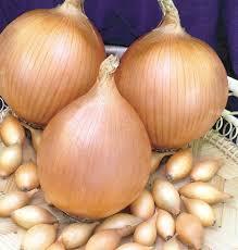 Семена озимого лука-севка Голиат 1кг