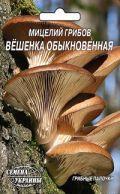 Семена мицелий грибов Вешенка обыкновенная 10шт