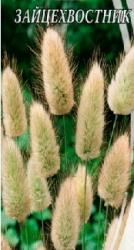 Семена Зайцехвостника (0,2г)