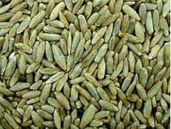 Семена ржи озимой  1кг