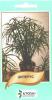 Семена Циперус 50шт