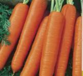 Семена морковь Карлена 9573 20 г