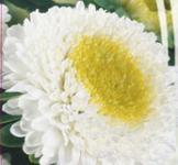 Семена Астры Помпонная Люкс (0,3г)