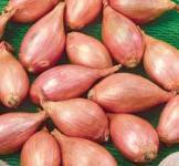 Семена лука - шалот 0,5г