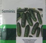Семена огурца  Маша F1 250 шт (Seminis Нидерланды)