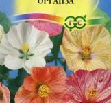 Семена абутилона Органзы, смесь ТМ «Гавриш» (10шт)