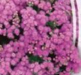 Семена  Агератум  Розовое Пламя 0,2г