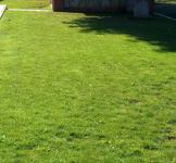 Семена травы Универсальная смесь 1 кг  (Dlf Дания)